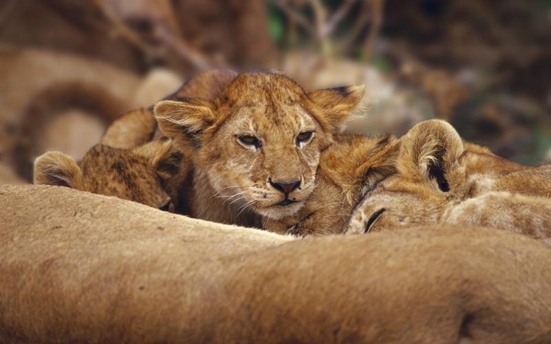 african-animals (5)