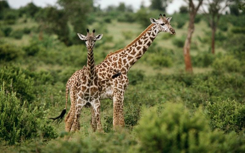 african-animals (6)