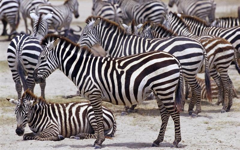 african-animals (11)