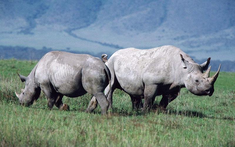 african-animals (13)