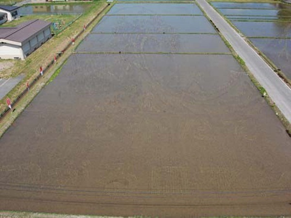 rice paddy art (2)