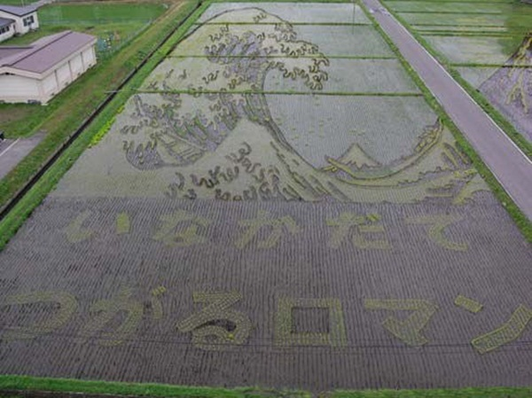 rice paddy art (3)