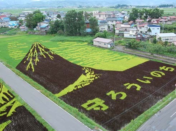 rice paddy art (9)