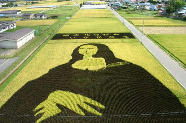 rice paddy art (11)