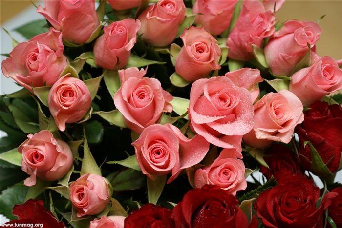 beautiful-roses-08