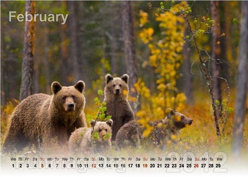 animals-calendar- (2)