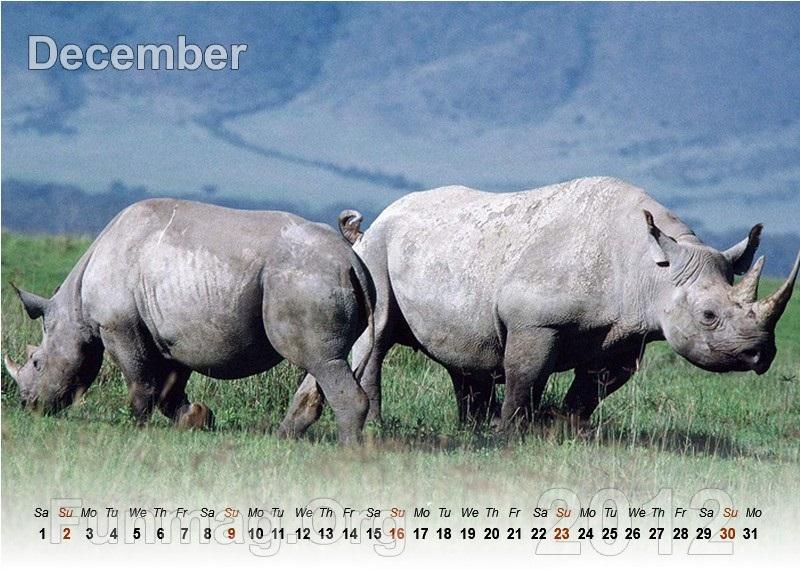 animals-calendar- (12)