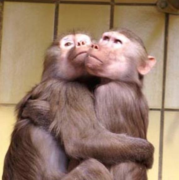 animals in love (1)
