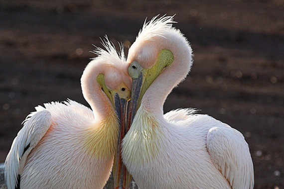 animals in love (6)