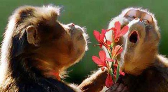 animals in love (7)