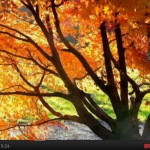 Amazing Autumn Video With Relaxing Music