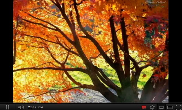 """autumn video"""