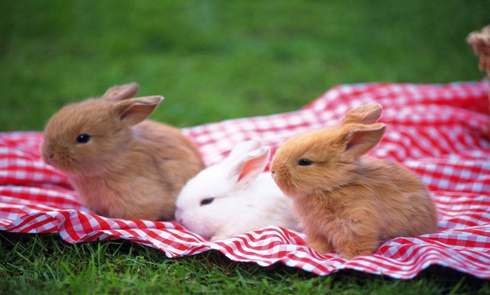 cute-rabbit- (1)