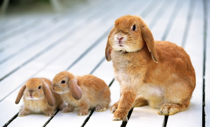 cute-rabbit- (2)