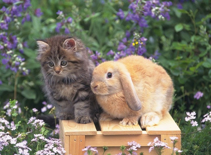 cute-rabbit- (3)