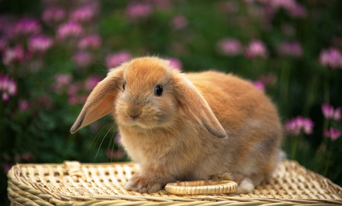 cute-rabbit- (9)