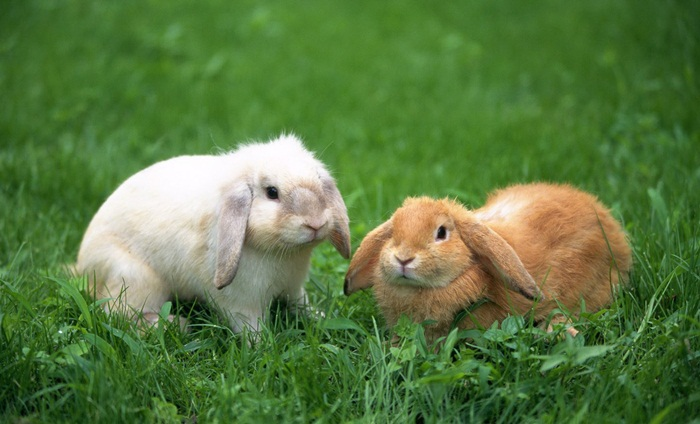 cute-rabbit- (10)