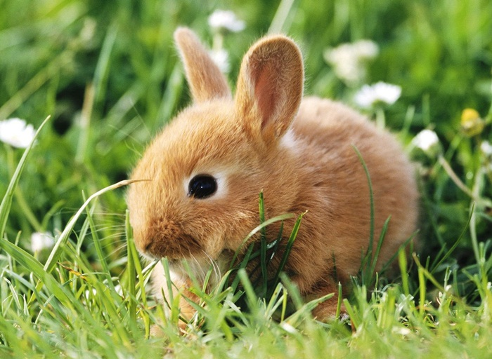 cute-rabbit- (12)