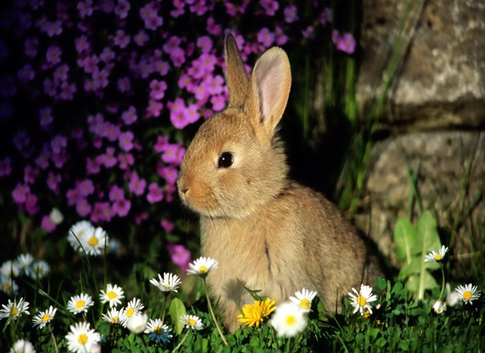 cute-rabbit- (13)