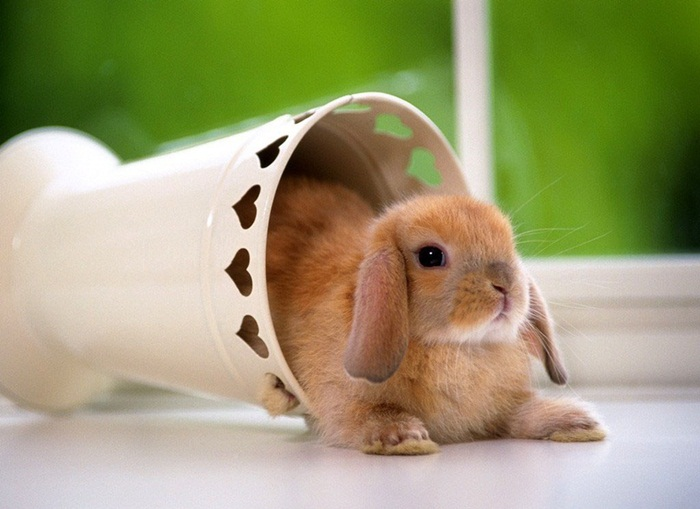 cute-rabbit- (15)