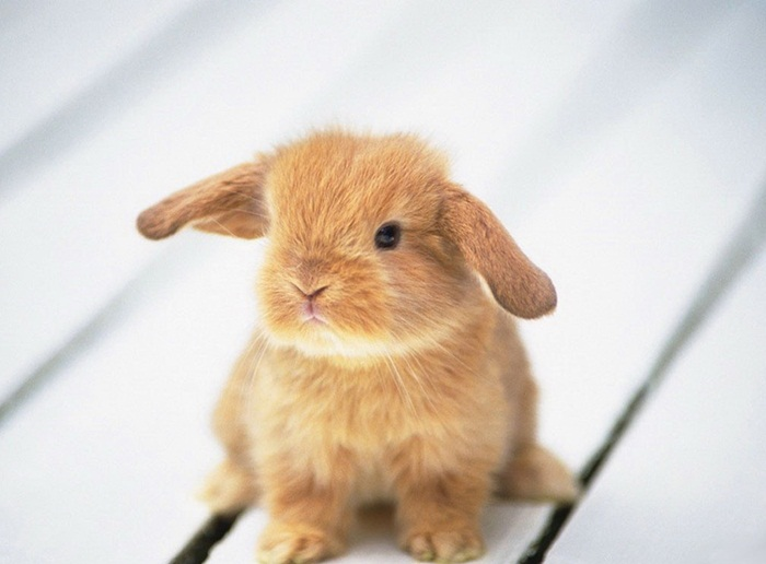 cute-rabbit- (17)
