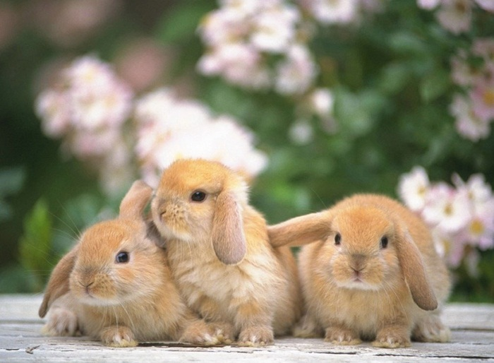 cute-rabbit- (27)
