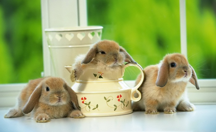 cute-rabbit- (28)