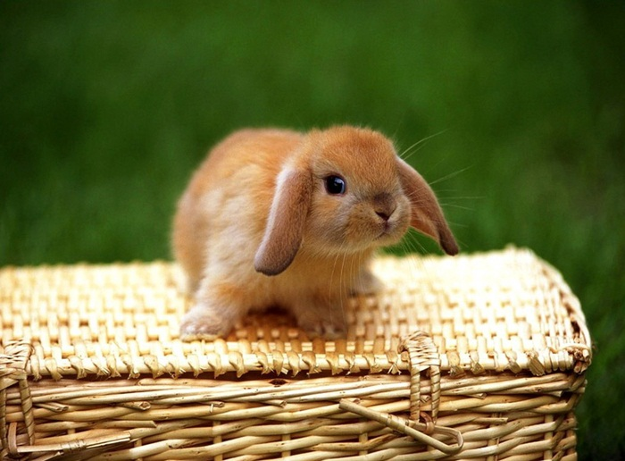 cute-rabbit- (29)