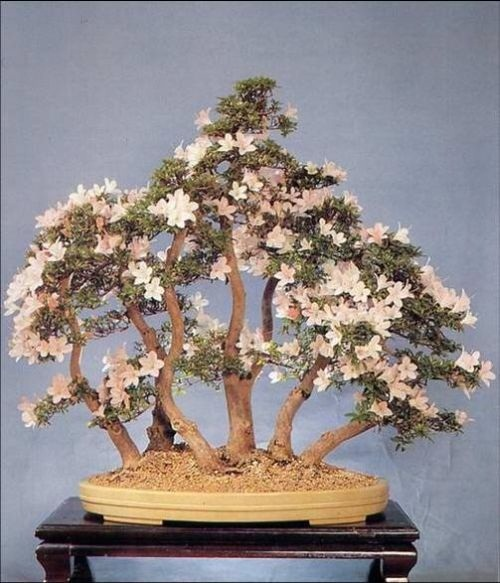 flower-bonsai-tree- (1)