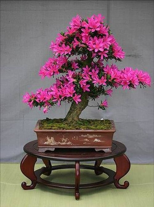 flower-bonsai-tree- (6)