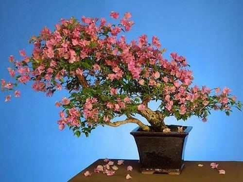 flower-bonsai-tree- (7)