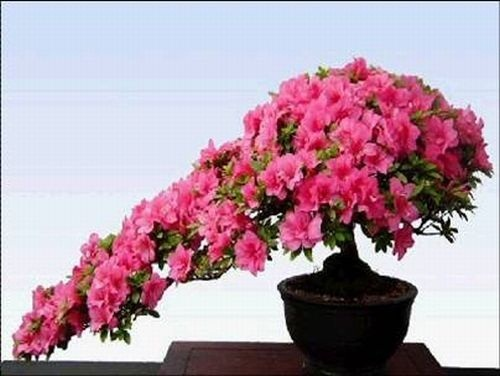 flower-bonsai-tree- (9)