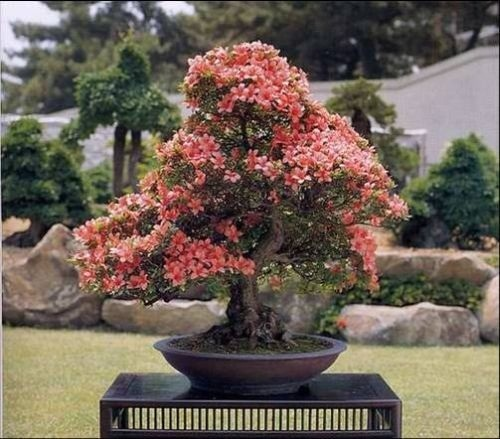 flower-bonsai-tree- (10)