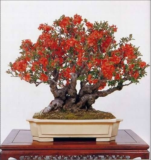 flower-bonsai-tree- (11)