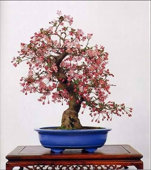 flower-bonsai-tree- (12)