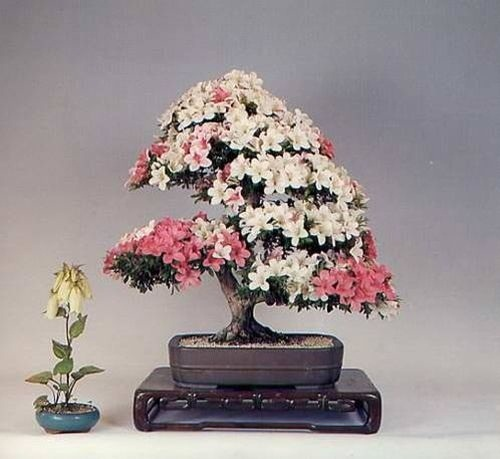 flower-bonsai-tree- (13)