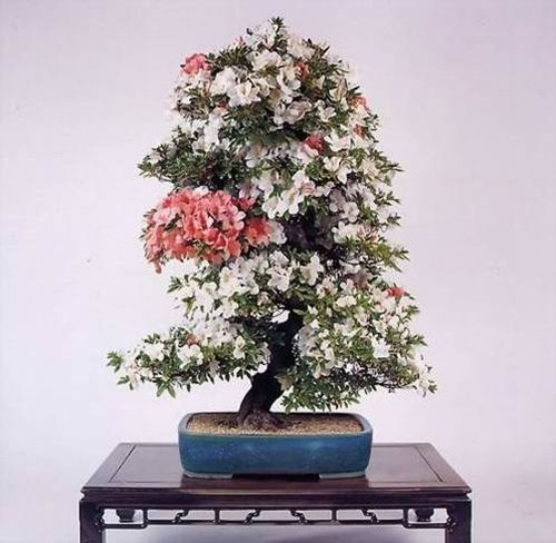 flower-bonsai-tree- (15)