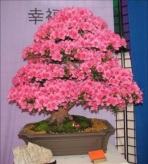 flower-bonsai-tree- (16)