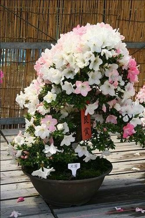 flower-bonsai-tree- (17)