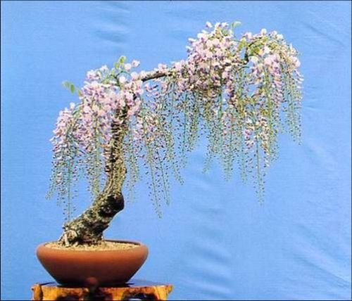 flower-bonsai-tree- (20)