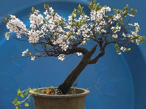 flower-bonsai-tree- (22)