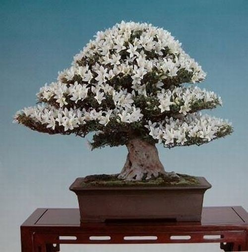 flower-bonsai-tree- (24)