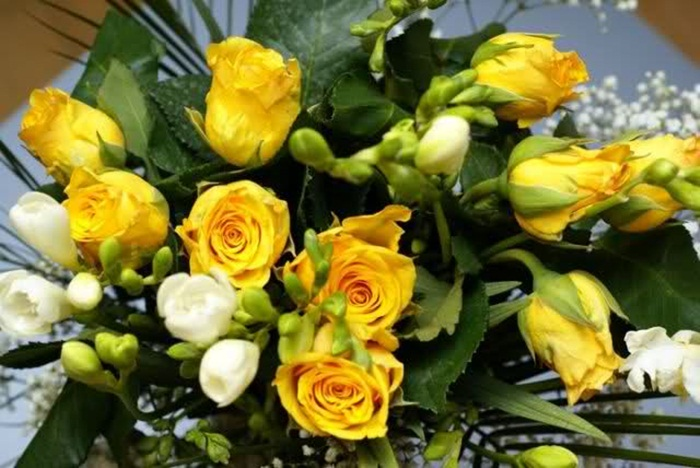 picture-of-yellow-roses- (7)