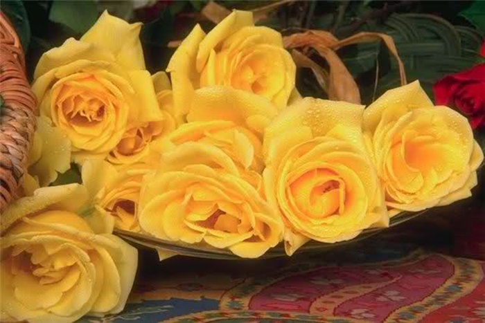 picture-of-yellow-roses- (17)