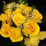 Pictures Of Yellow Roses-25 Pics