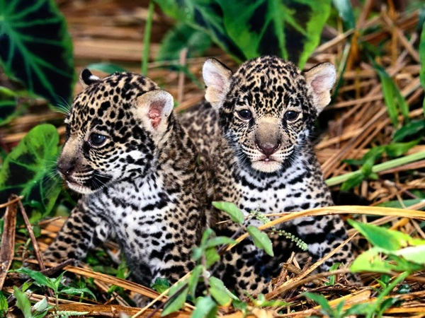 twin-animals- (14)