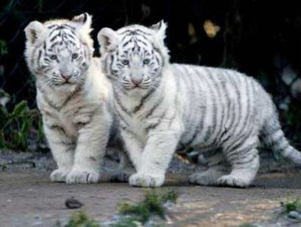 twin-animals- (23)