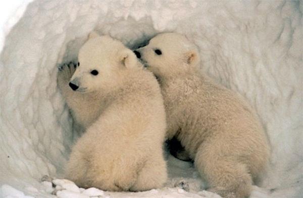 twin-bear- (2)