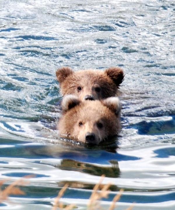 twin-bear- (3)