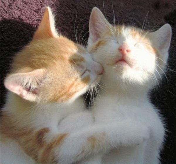twin-kitten- (1)